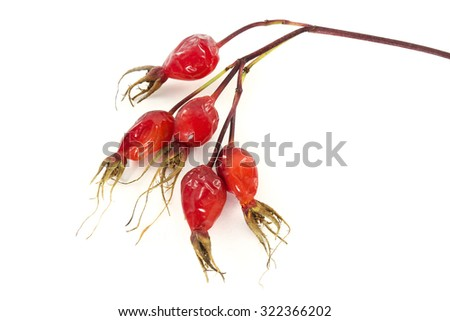 A branch of wild rose with ripe dried berries isolated on white - stock photo