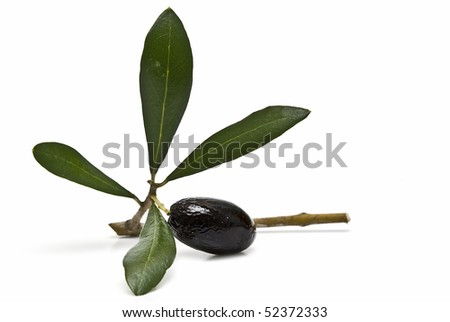 A branch with a black olive isolated on a white background.