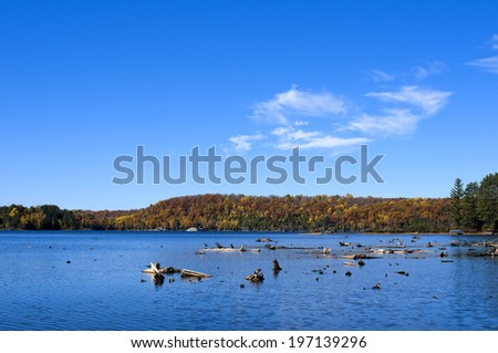 A bright blue lake with logs and stumps floating in it. - stock photo