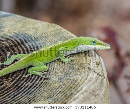 A bright green lizard sits on top of a post.
