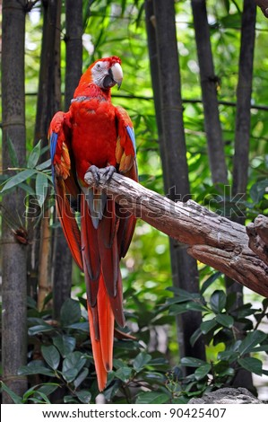 A bright red parrot relaxing  on a perch - stock photo