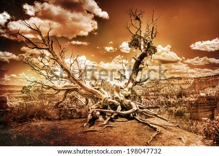 A Bristlecone Pine tree with exposed roots is perched on the edge of Bryce Canyon, Utah, United States - stock photo