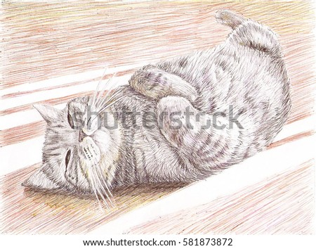 A british cat is sleeping on the floor in sunlight. Hand 