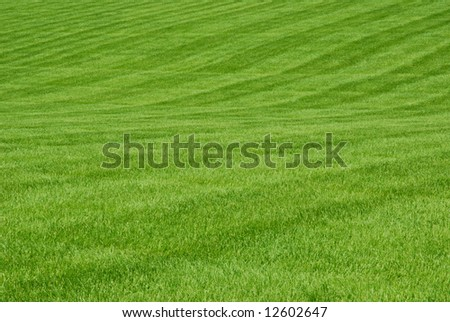 A broad expanse of green grass.