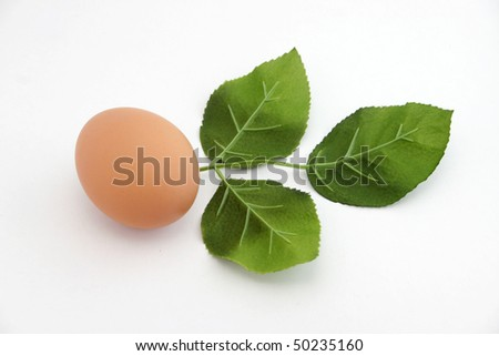 A brown egg with three leafs. - stock photo
