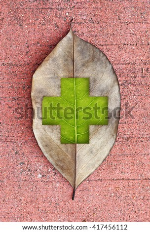 A browning decaying leaf with a fresh green leaf cross symbol, for the concept of save our trees. - stock photo