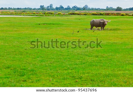 A buffalo stands in the green field - stock photo