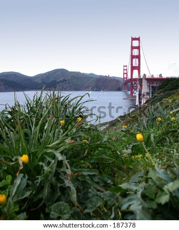 A Bugs View - stock photo