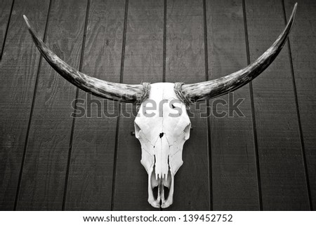 A bull skull mounted on wooden wall, in black and white. - stock photo
