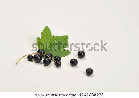 Bunch Black Currant Berries On White Stock Photo (Edit Now ...