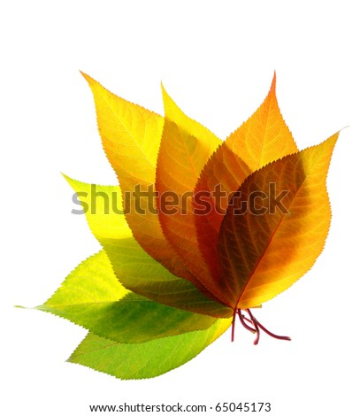A bunch of fall leaves isolated on white background - stock photo