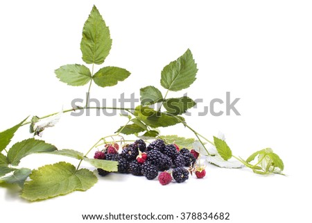 a bunch of forest blackberries with leaves