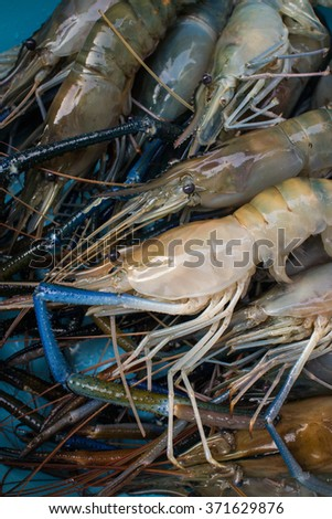 A bunch of fresh Shrimp on ice at raw food market in Thailand. Seafood - stock photo