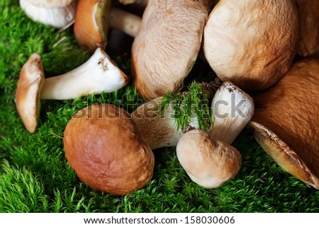 A bunch of mushrooms (porcini) on moss  - stock photo
