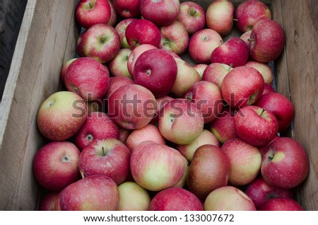 A bunch of organic apples