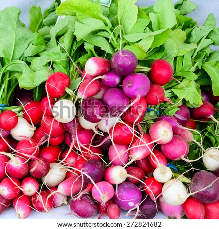 A bunch of organically grown Easter egg colorful radish in the Fruits and Vegetables stall at University District farmer market (aka U-district) in Seattle, WA, USA - stock photo
