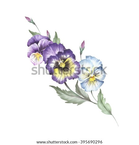A bunch of pansies.Watercolor illustration