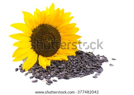 a bunch of seeds in a sunflower - stock photo