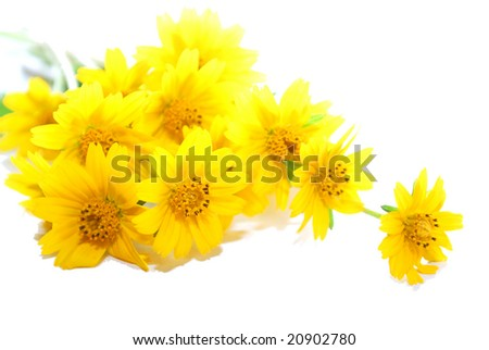 a bunch of tiny yellow daisies - stock photo