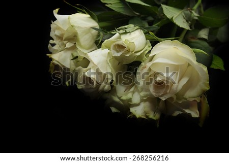 A bunch of  white roses over black background
