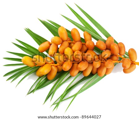 A bunch of yellow raw dates with palm leaf on white - stock photo