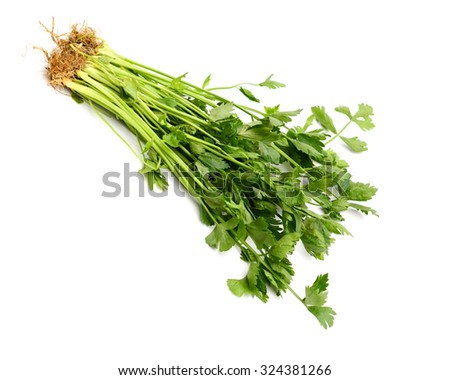 a bundle of cilantro isolated on white