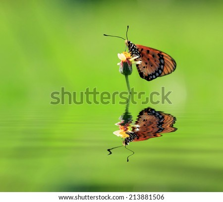 a butterfly is looking for food - stock photo