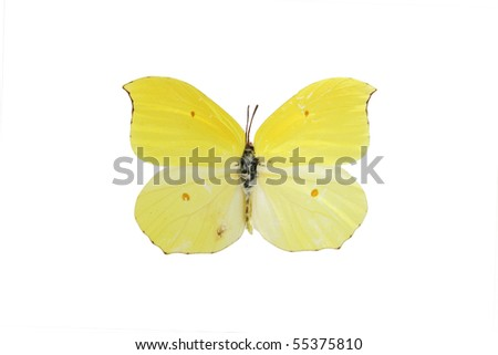 A  butterfly isolated on white background - stock photo