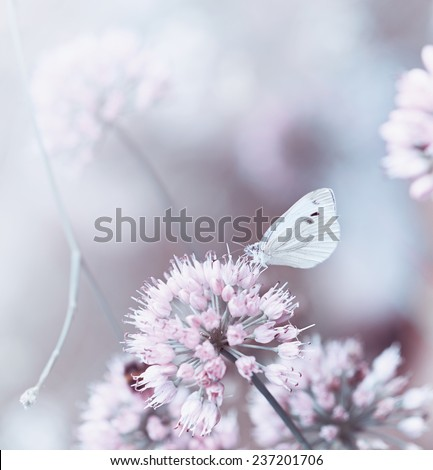 A butterfly on a flowering onion - stock photo