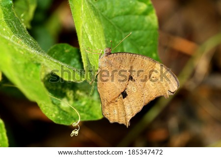 A butterfly on leaf - stock photo