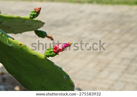 A CACTUS FLOWER - stock photo
