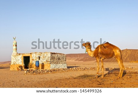 A camel at front of a small local mosque under sunset in the desert of Hurghada, Egypt. - stock photo