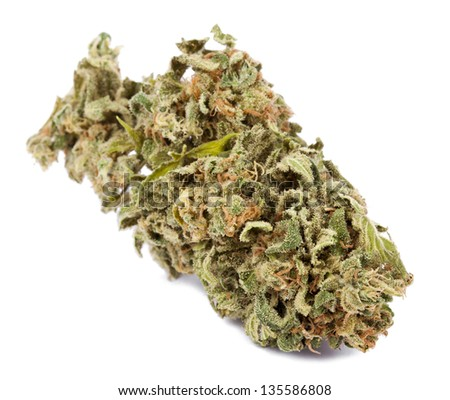 A Cannabis bud that had been grown by hydroponic process, isolated on white background.