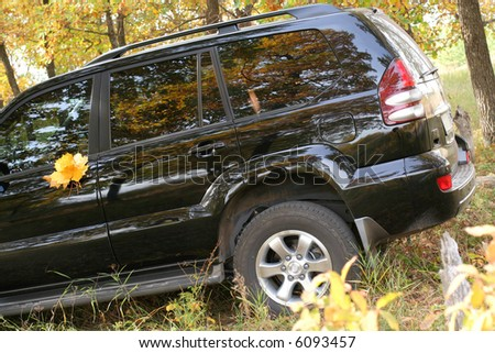 a car on leaves