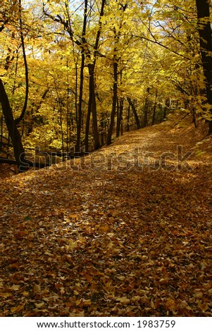A carpet of golden maple leaves - stock photo
