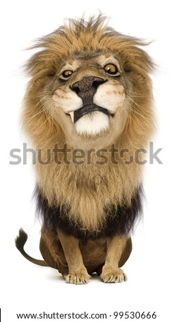 A cartoony proud lion king staring suspiciously. - stock photo
