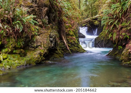 A cascading waterfall at Willaby Creek near its flow into Lake Quinault in the Olympic National Forest, Washington. - stock photo