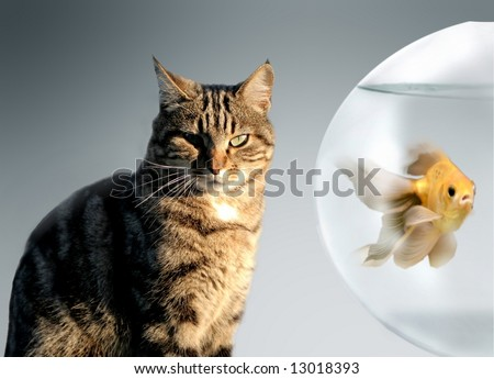 a cat and a fish - stock photo