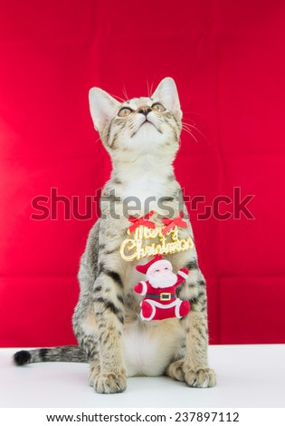 A cat bind wire santa claus for christmas on red background