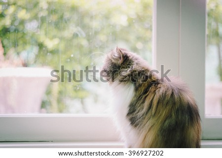 A cat chilling out, relax and being natural in the room. Comfort and safe with soft focus - stock photo