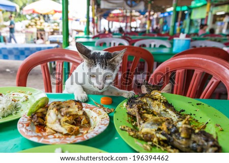 A cat eating leftovers (fish and chicken) directly on the table, Jakarta, Indonesia - stock photo