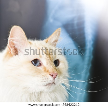 A cat having a examination at a small animal vet clinic  - stock photo