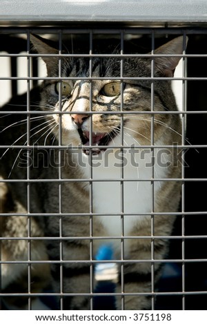 A cat in a cage meowing to be let out - stock photo