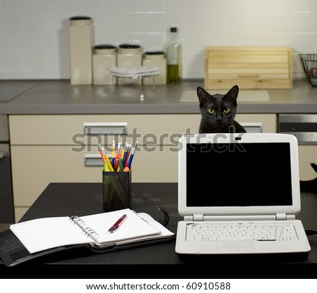 A cat in a home office - peeping behind a laptop screen on a desk with stationery equipment and books, kitchen in the background.