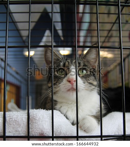 a cat in a local shelter - shot at high iso - stock photo