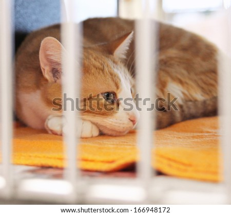 a cat in a local shelter shot at high iso - stock photo