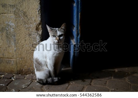 A cat in Morocco, Africa