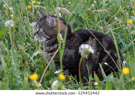 A cat in the spring meadow