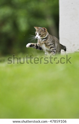 A Cat is getting to catch a Fly - stock photo