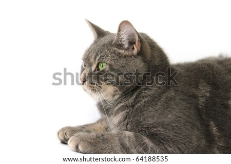 a cat isolated on white